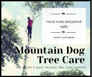 mountain dog tree care 300x250