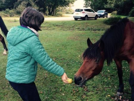 Cal blând-sălbatic din Pădurea Nouă-veche