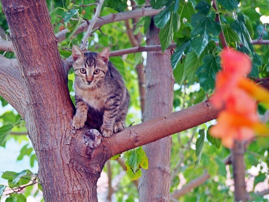 pisica lui Tipex