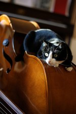 Daily Bass Pic – cats and basses
