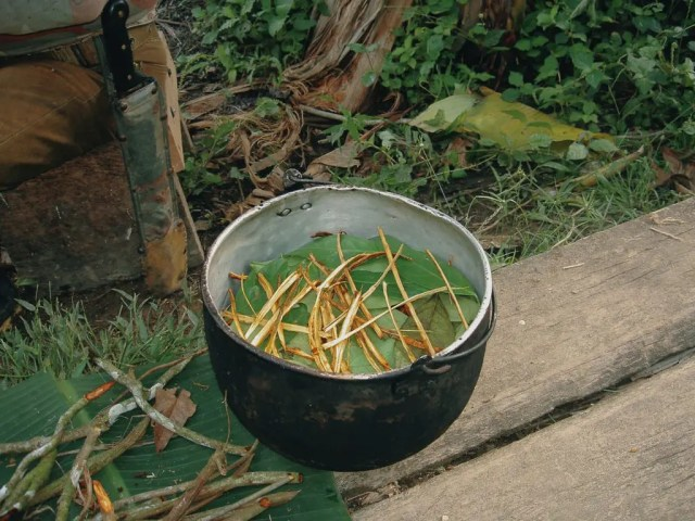 DoubleBlind: Traditional Ayahuasca in a pot.