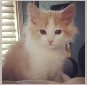 Our new kitten!