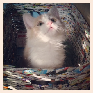 "Oliver is getting bigger every day! Here he is sitting in my ""Recycle"" basket."