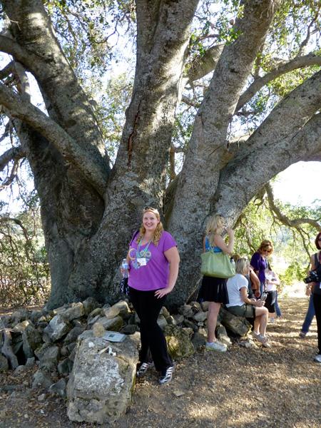 The Ancestor Tree, Halter Ranch
