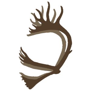 double shovel caribou antlers