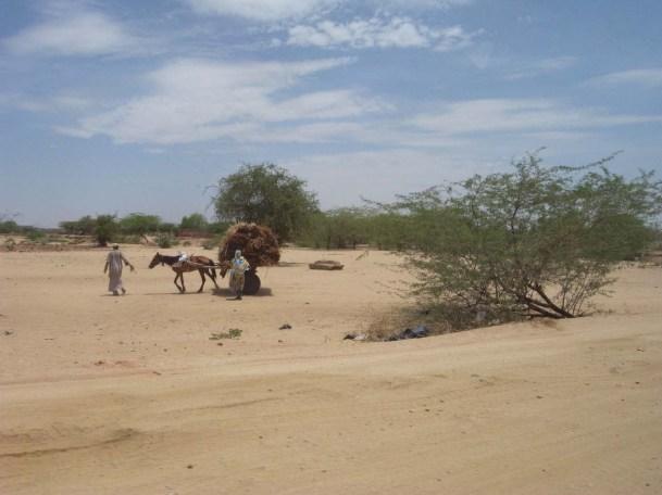 desert_cart