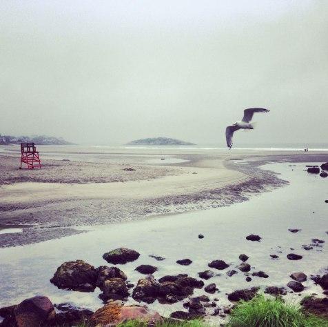 IG_bird