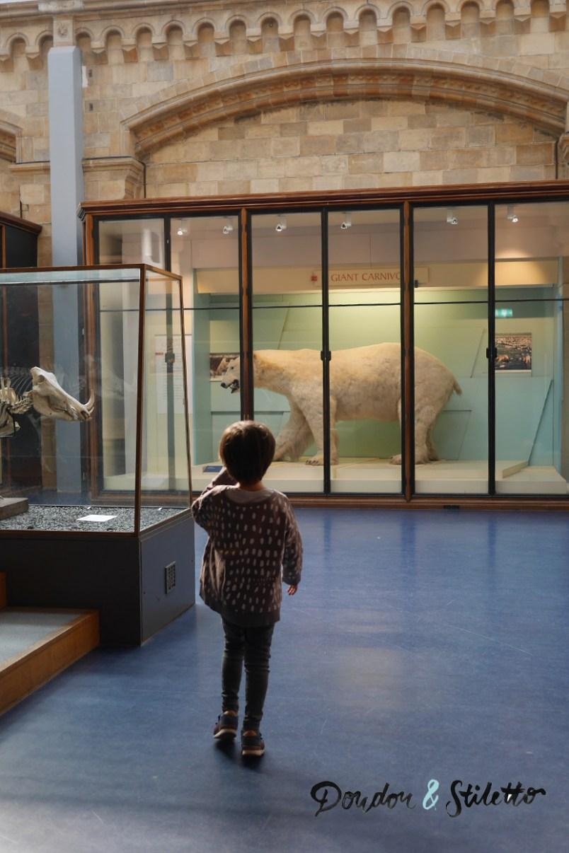 Musée d'histoire naturelle londres 3