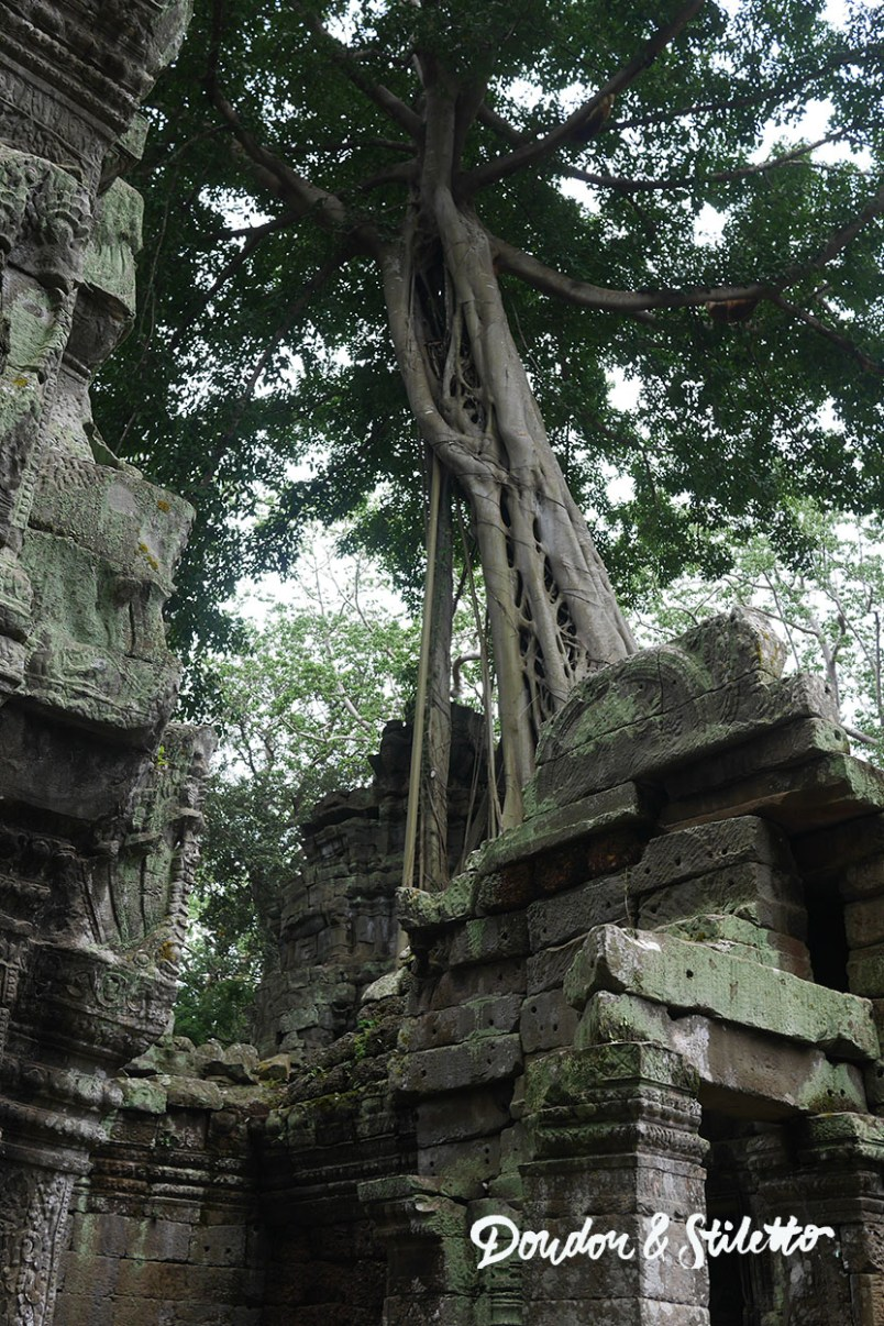Ta Phrom Angkor 4