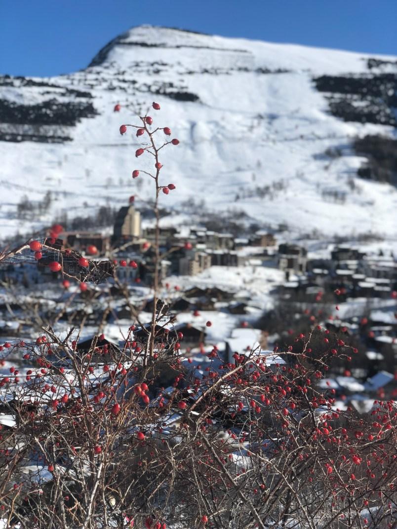 Les 2 Alpes16