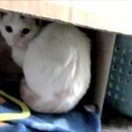 子猫に癒されてたらハプニング お宅訪問の出来事