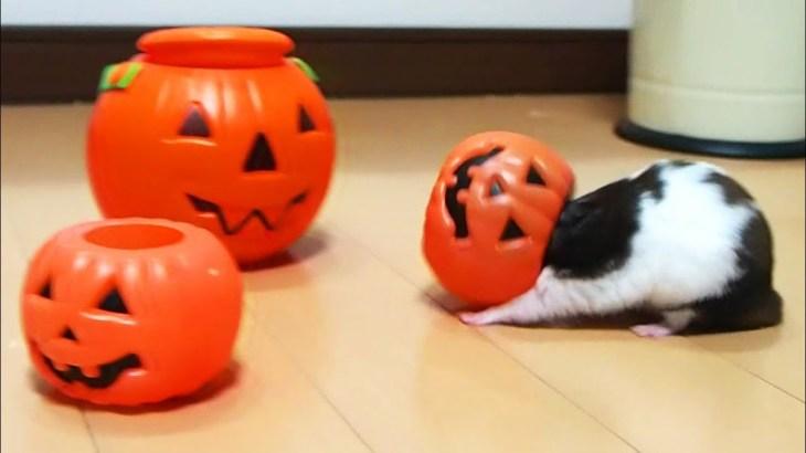 ハプニング!ハムスターの顔が抜けない10連発!おもしろ可愛いハムスターFunny Hamster's face can not escape 10 consecutive shots!