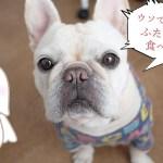 愛犬もビックリ?1粒に2つの味わいがする犬のおやつ