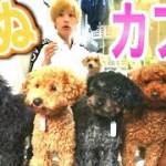 【いぬカフェ】可愛い犬達にお願いして芸をたくさんやってもらった!