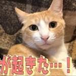 【感動】ロビンさんがとんでもない奇跡を起こしました…!!