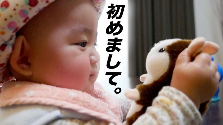 赤ちゃん 可愛いおしゃべりハムスターに初めて出会う![生後7ヶ月]Baby Meets cute talking hamster!