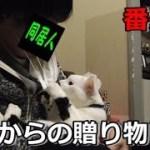 猫フク姫から貰ったプレゼント(面白い&可愛い猫)