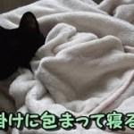 寝ながら耳がピコピコ動く黒猫ビター(面白い&可愛い猫)