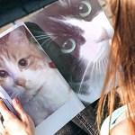 興味深い検証!オス猫が可愛い鳴き声でオス猫を呼ぶ?猫の定説が覆るか