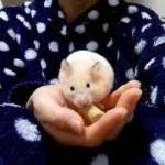 やばい!手乗りハムスターが可愛すぎる!おもしろ可愛いハムスターHand riding Funny hamster is too cute