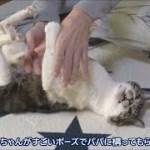 猫らしくない猫!?びっくりな格好でなでなでしてもらうリキちゃん☆グルーミング姿もおっさん座り【リキちゃんねる 猫動画】Cat videos キジトラ猫との暮らし