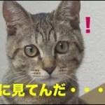 冷蔵庫の上からなにやら訴える子猫・・・[子猫][保護猫][可愛い][癒し]