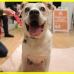 【感動!】耳を切られ、8年もの間檻に閉じ込められていた犬を救出!愛してくれる家族と出会い…【世界が感動!涙と感動エピソード】