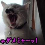猫フク姫、約4ヶ月経って変化した事(面白い&可愛い猫)