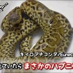 蛇に食べるだけ雛うずらを与えていたらまさかのハプニング!?