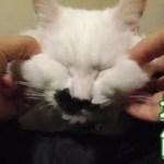 猫フク姫のフワフワモチモチほっぺた(面白い&可愛い猫)