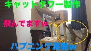 子猫とキャットタワー作ったら凄い楽しかったwww [子猫][保護猫][可愛い][癒し]