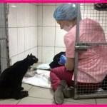 【感動】動物病院で一命を取り留めた黒猫。麻痺した足を引きずりながら、重病の動物達の精神的サポートを続ける!【世界が感動!涙と感動エピソード】