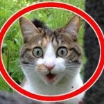【癒されて笑える!!】おもしろ可愛い動物ツイートまとめ2 癒しの犬、猫、動物の画像集 疲れた時にどうぞ!【吹いたら負け】