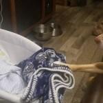【感動】寝ている赤ちゃんを隣で見守る犬・隣にぴったり寄り添う姿に癒される