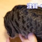 【面白い!】猫をモフってたらもう一匹の猫が嫉妬したw【すず/コテツ】