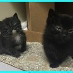 【感動】子供たちから虐待され瀕死の状態の2匹の子猫。獣医師は安楽死を提案するが・・・【世界が感動!涙と感動エピソード】