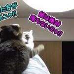落ちそうなのにやっぱり落ちない、猫フク姫(面白い&可愛い猫)