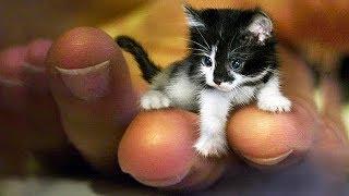 「猫かわいい」 すごくかわいい子猫 – 最も面白い猫の映画 #132