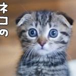 世界初!?猫のモーニングルーティーンが可愛い!!猫はねこケーキを食べるのか??【生誕1周年特別企画】