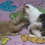 子猫に完全勝利した姉猫がかわいいwww
