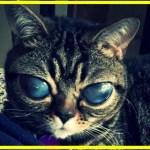 【感動】猫の大きな瞳の中に広がる宇宙!先天性異常を持つ猫と飼い主の強い絆に感動の涙!【世界が感動!涙と感動エピソード】