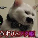 猫フク姫、小刻みな揺れが逆に落ち着く?(面白い&可愛い猫)