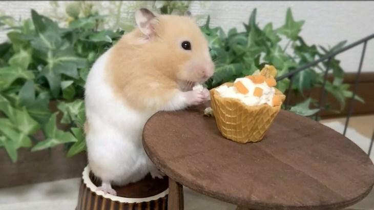 豆腐のカップケーキをあげてみたら…Part1おもしろ可愛い癒しハムスター I made tofu cupcakes for Funny hamsters!