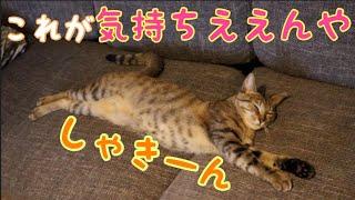 すごい伸びて寝る子猫 [子猫][保護猫]