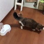床磨きをする子猫がかわいい