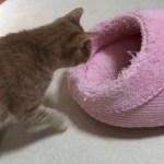 すし詰め状態の猫がかわいい
