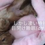 ミニチュアダックスフンド すごい格好で眠る可愛いモモさん(≧∀≦)