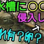 亀水槽に飛び込んだ◯◯の能力にビックリ!