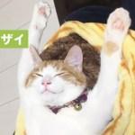 猫さん、すごい寝相である事を思う…【PECO TV】