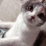 「猫かわいい」 すごくかわいい子猫 – 最も面白い猫の映画2018 #158